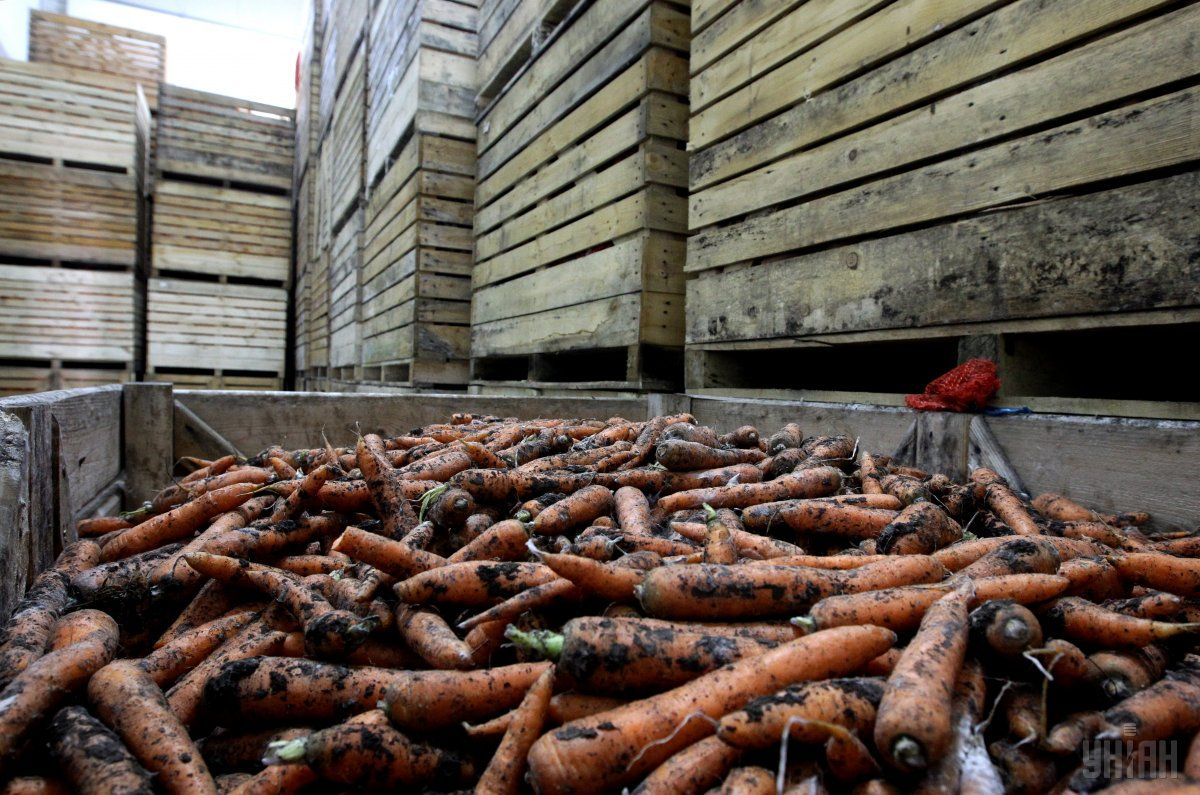 Продукція рослинництва за звітний період подорожчала на 7,3% / фото УНІАН