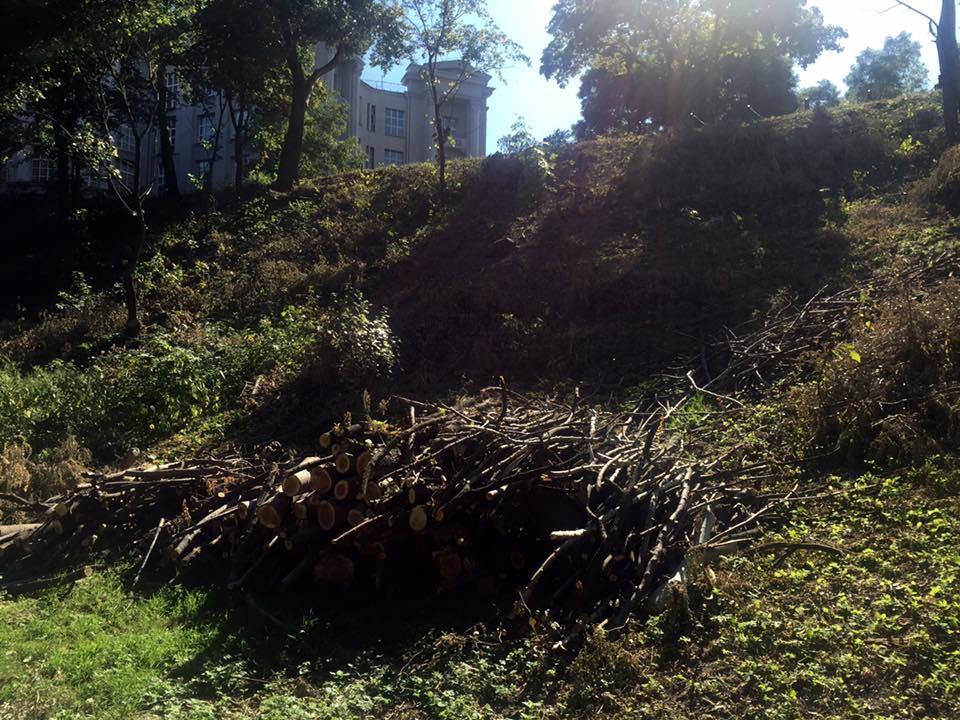 За последние 5 лет это первый случай массового уничтожения зеленых насаждений в Подольском районе / Фото  КП СЗН Подольского района Киева