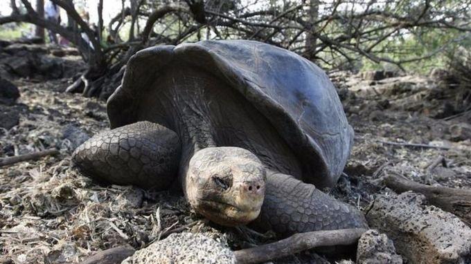 Черепаха / REUTERS