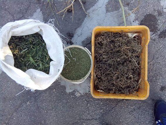 Всього було вилучено 120 кг марихуани / Сайт ГУ НП у Дніпропетровській області