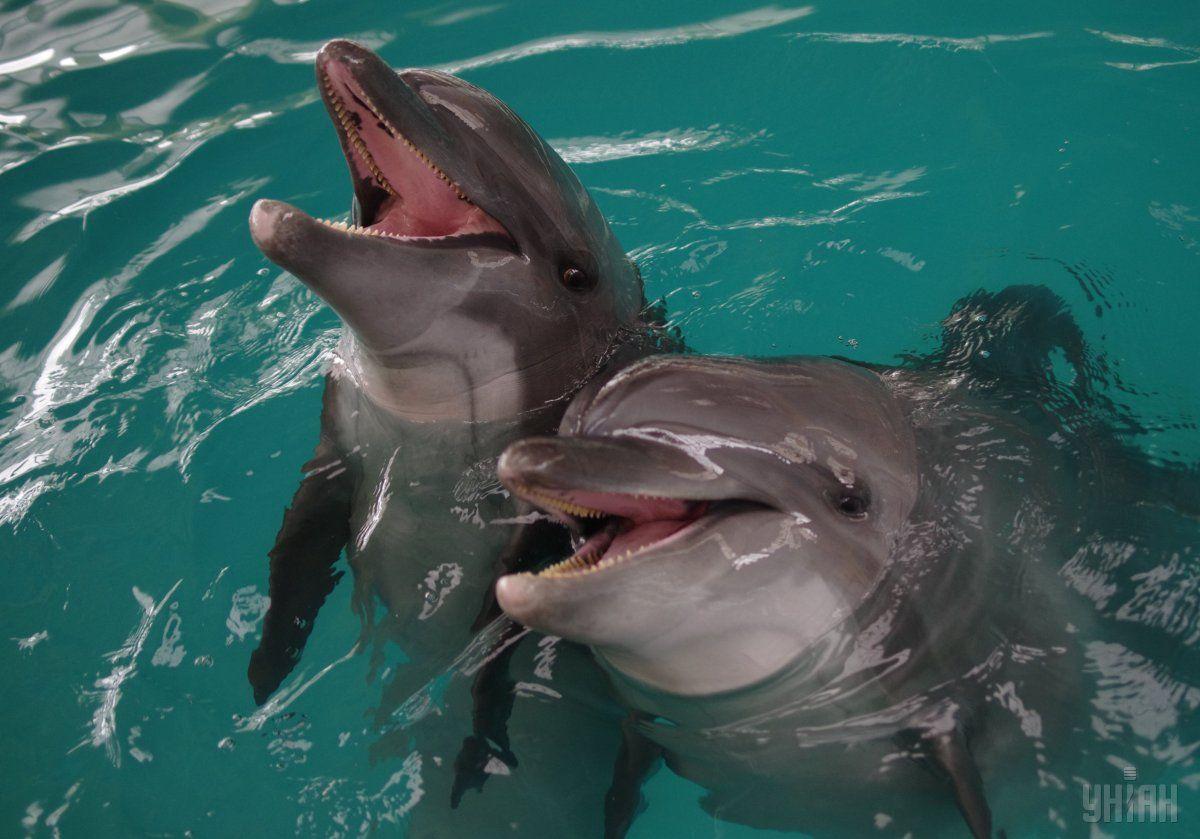 Смертность дельфинов в 2017 году заметно превышает аналогичный показатель за последние годы / фото УНИАН
