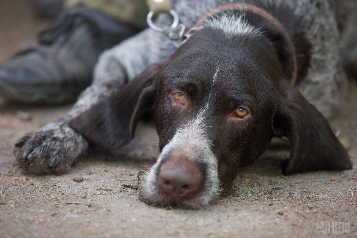 Киянин, який оголосив війну безпритульним тваринам, постане перед судом / Фото УНИАН