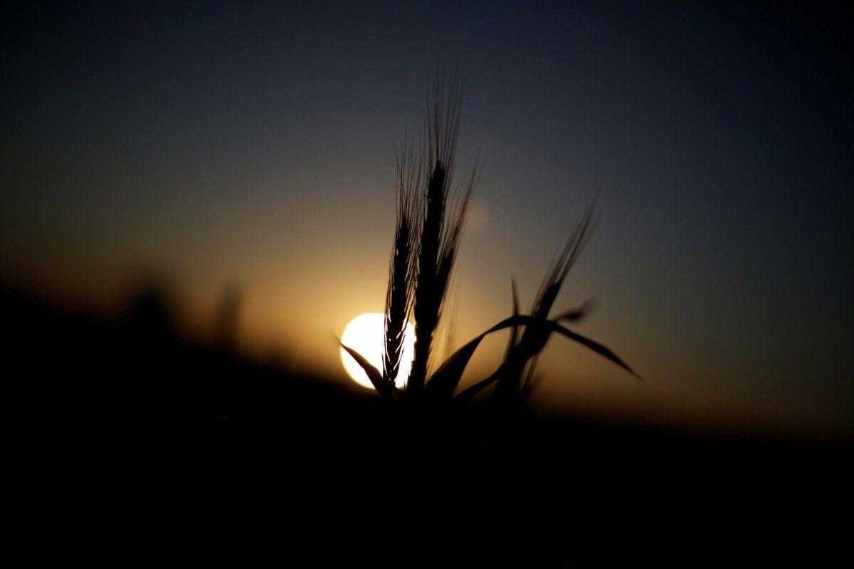 Глобальное потепление может отобрать в Украиныроль одного из главных экспортеров продовольствия / REUTERS