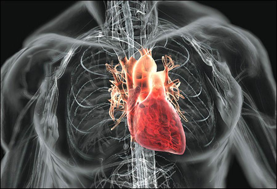 Избыточный вес грозит болезнями сердца / фото newsru.co.il