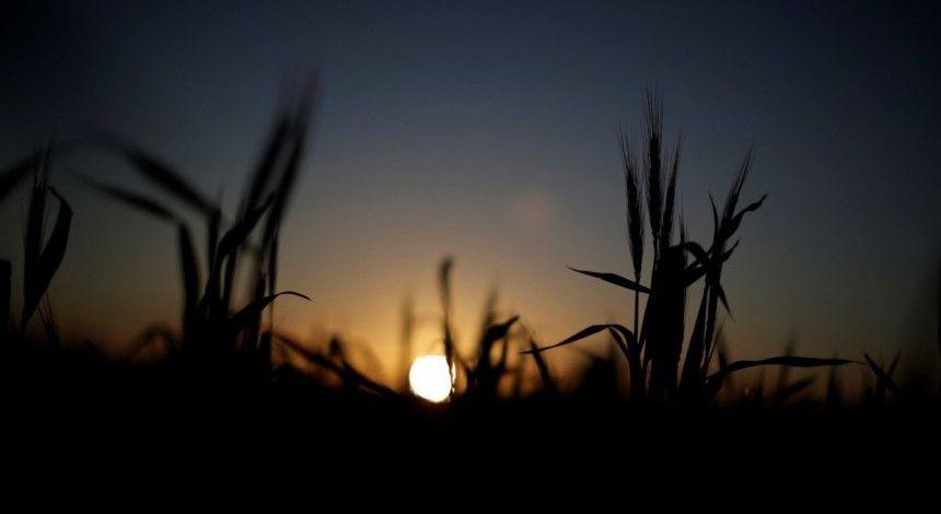 Аграрії вже намолотили 37 мільйонів тонн зерна