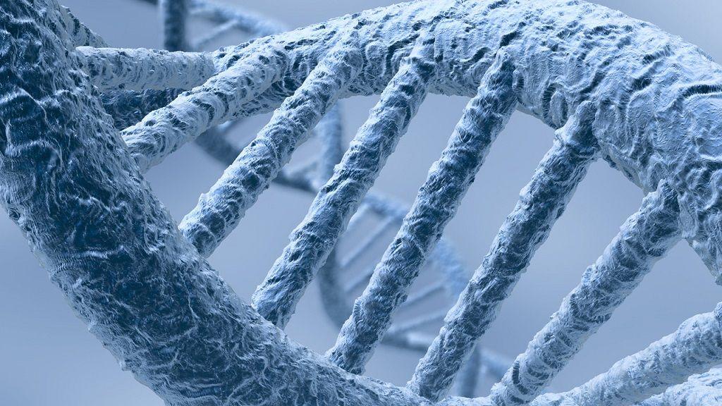 Геномный анализ выявил 16 генетических вариантов, ассоциированных с мышечной силой / фото popmech.ru