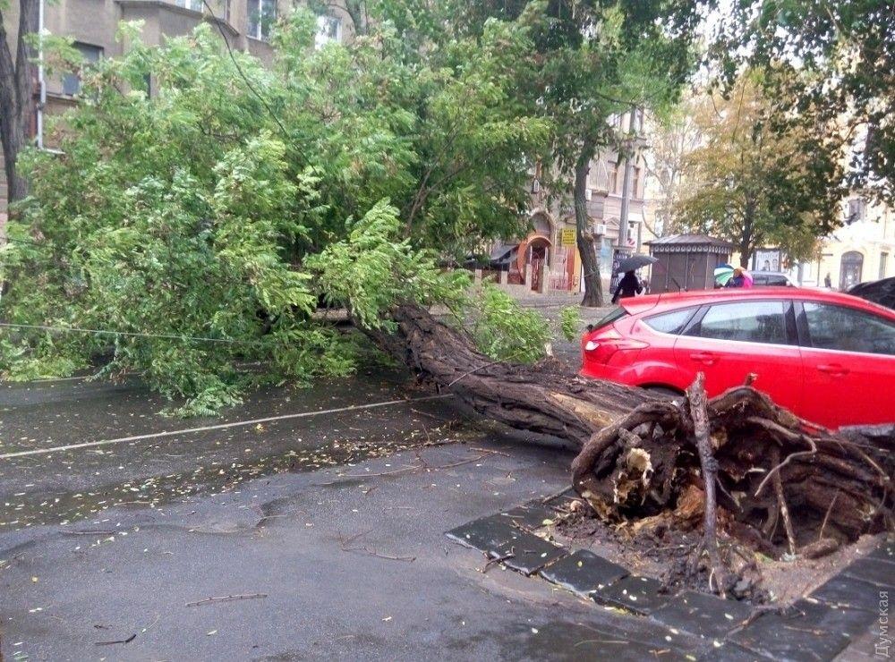 В Одеській області сильний вітер повалив дерева / Думская