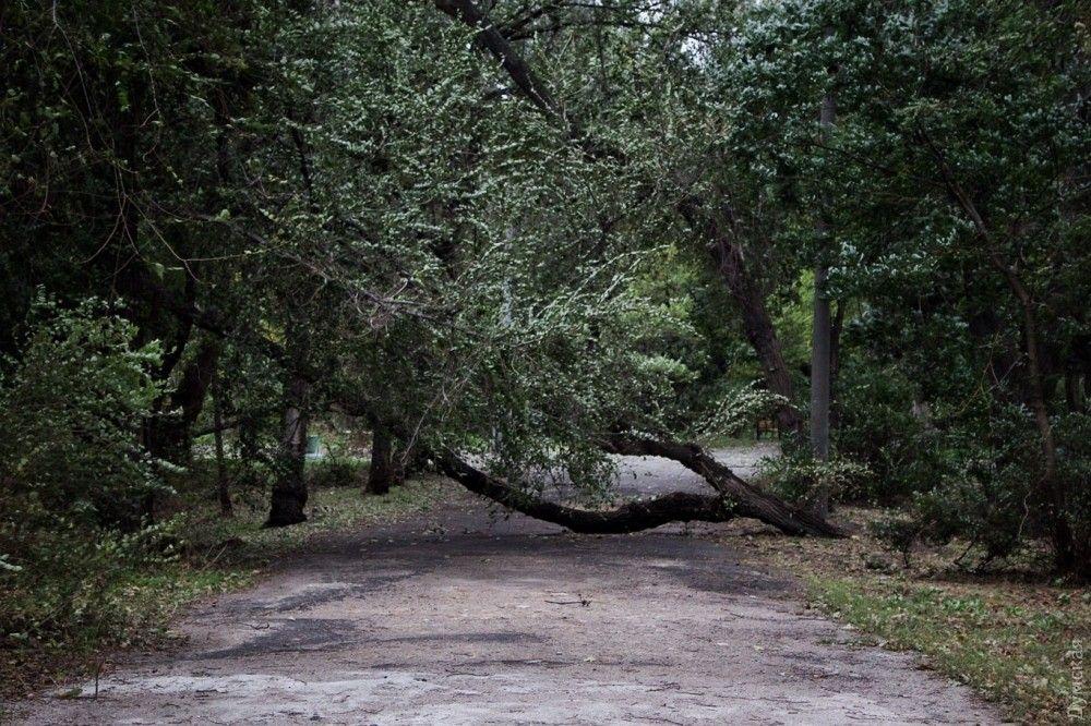 В Одессе сильный ветер повалил деревья / Думская