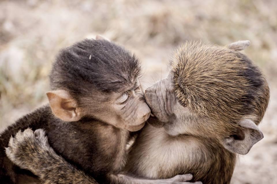 Прикол поцелуй фото картинки