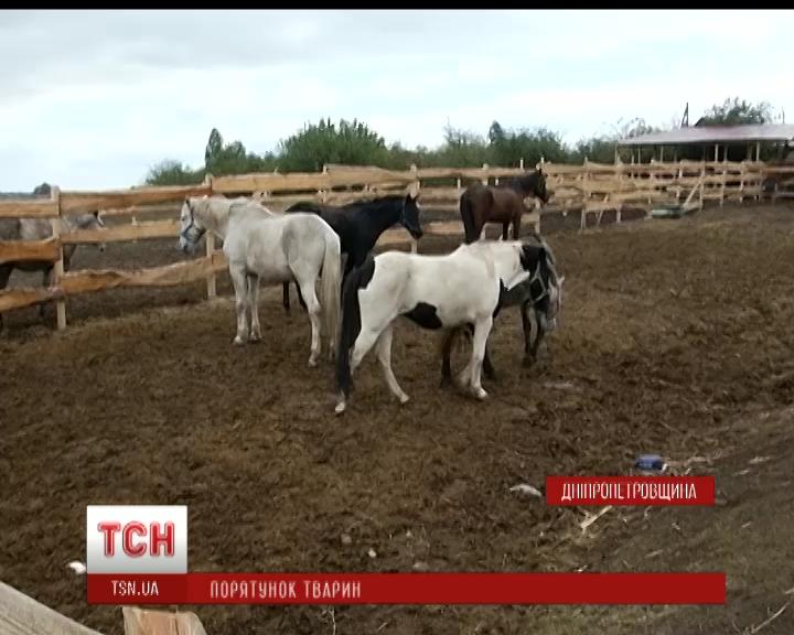 На Днепропетровщине волонтеры пытаются достроить приют для лошадей до наступления холодов /