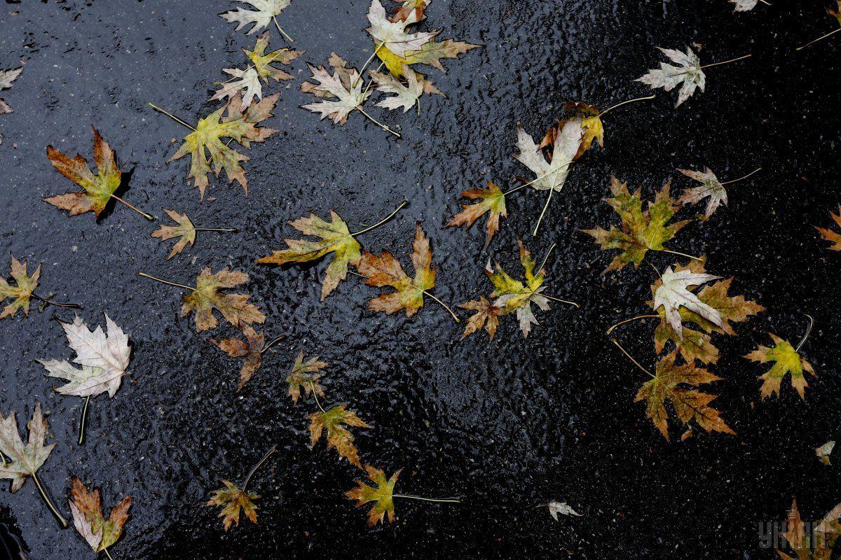 Сегодня местами пройдут дожди / УНИАН
