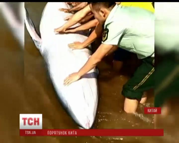 Спасательная операция: жители деревни на юге Китая спасли 5-метрового кита /