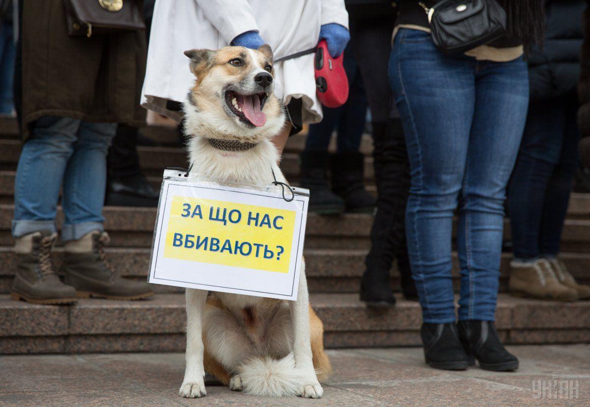 Акція на підтримку тварин у Києві / Фото УНІАН