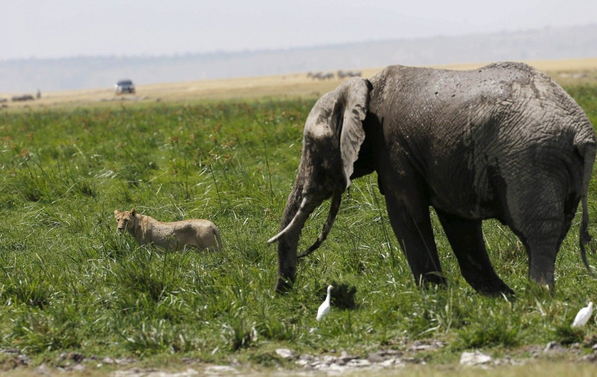 Заповедник в Кении / Фото REUTERS