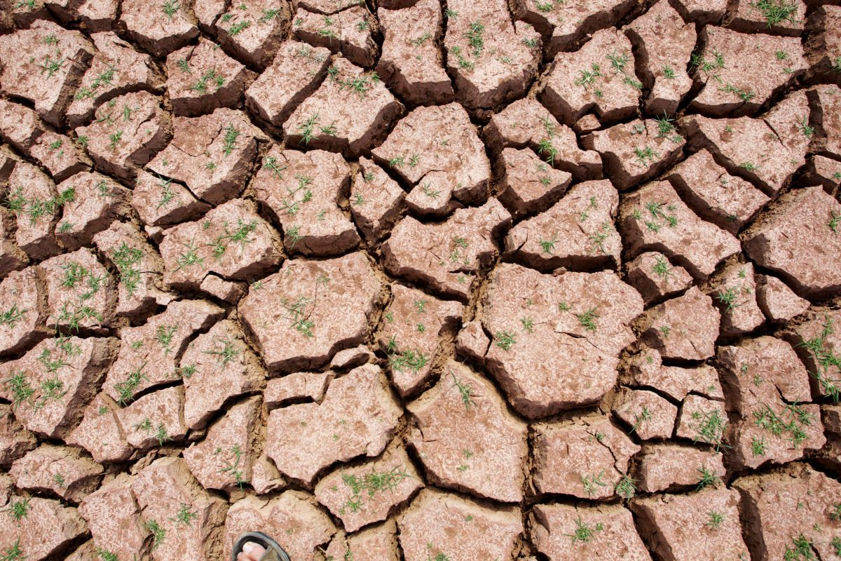 Иллюстрация: сухая земля / Фото REUTERS