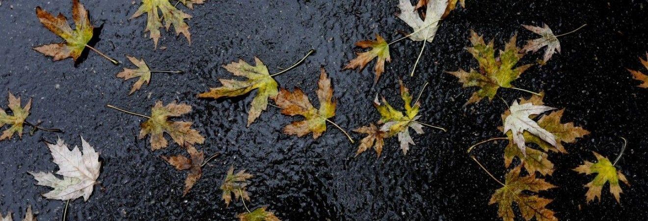 Погода на неделю: в Украину придут дожди и похолодание (карта)