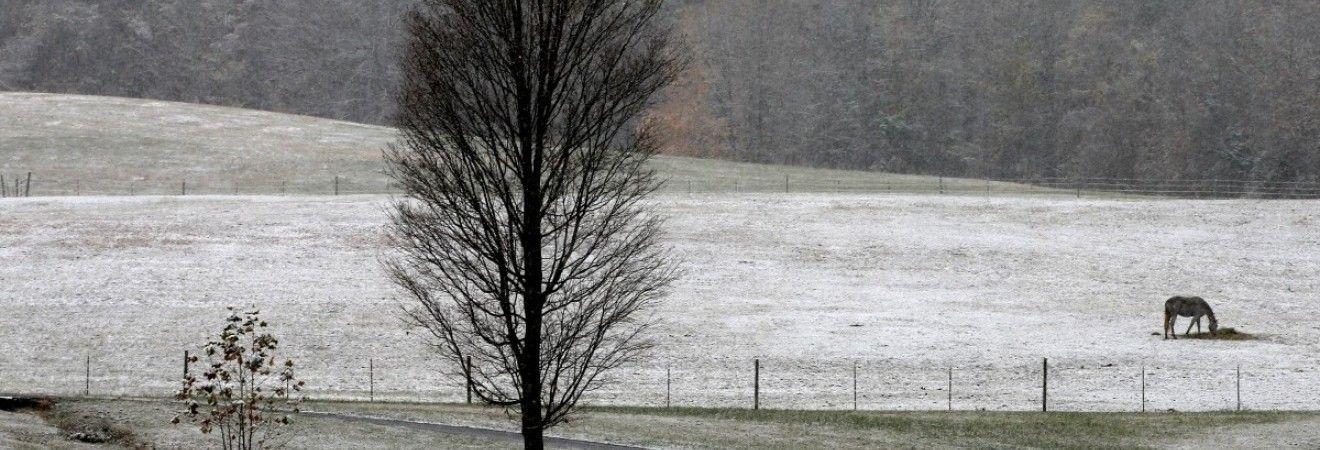Синоптики предупреждают украинцев о сильном ветре и налипании мокрого снега