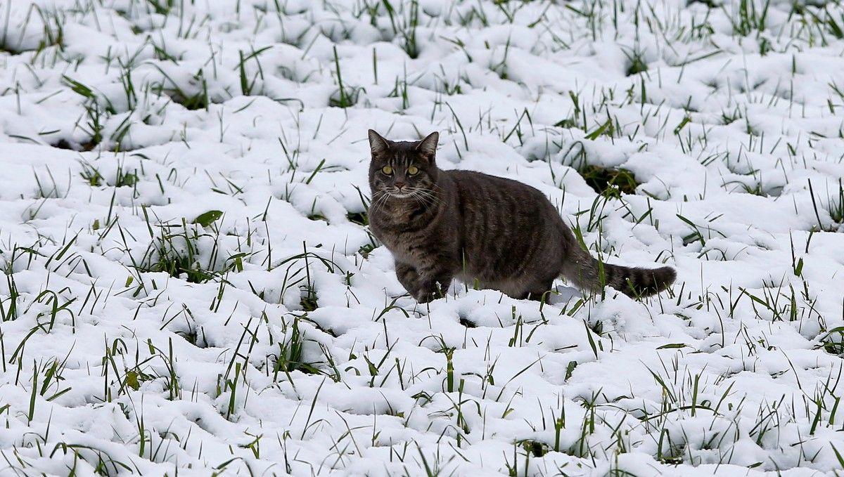 В Україні вже через кілька днів має стати тепліше / фото Reuters