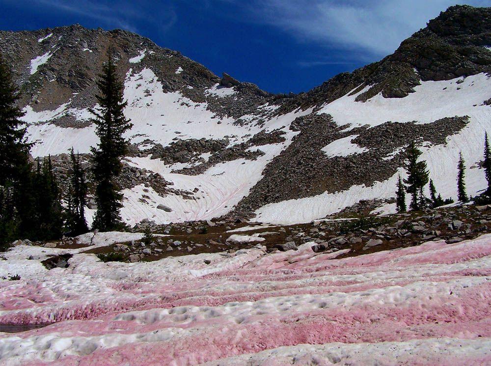 Існує червоний сніг / eco-turizm.net