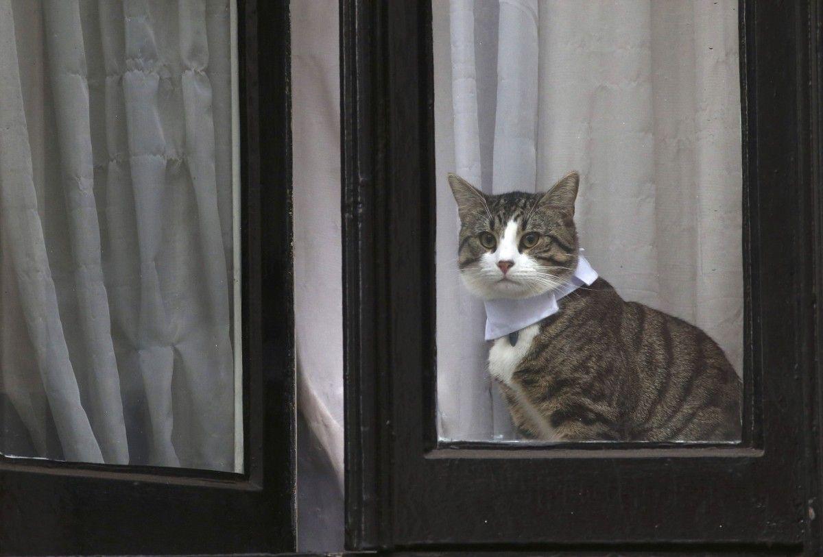 Кіт Джуліана Ассанжа / REUTERS