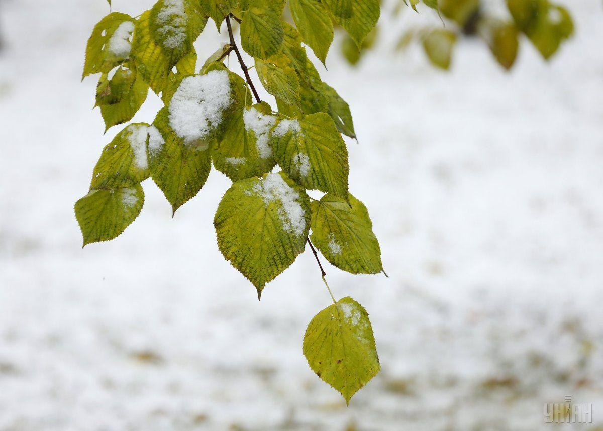 Мокрий сніг в Україні очікують уже завтра / УНІАН