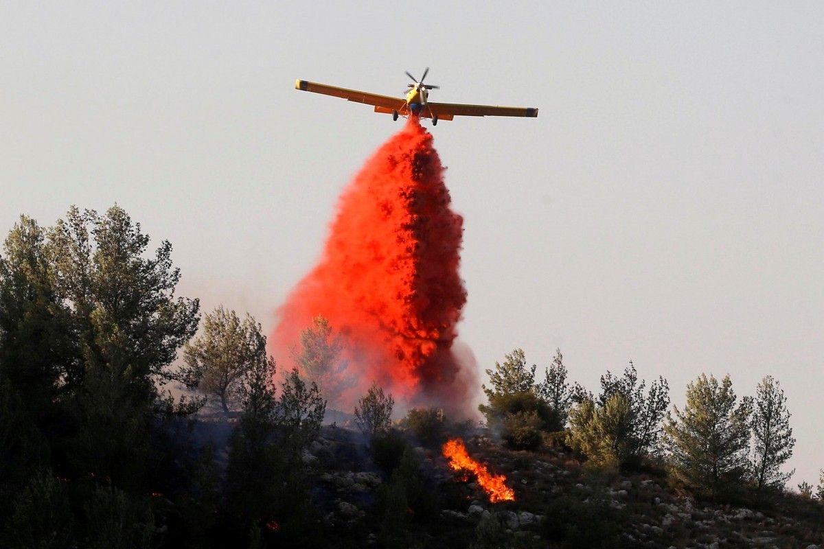 Лісові пожежі в Ізраїлі / Фото REUTERS