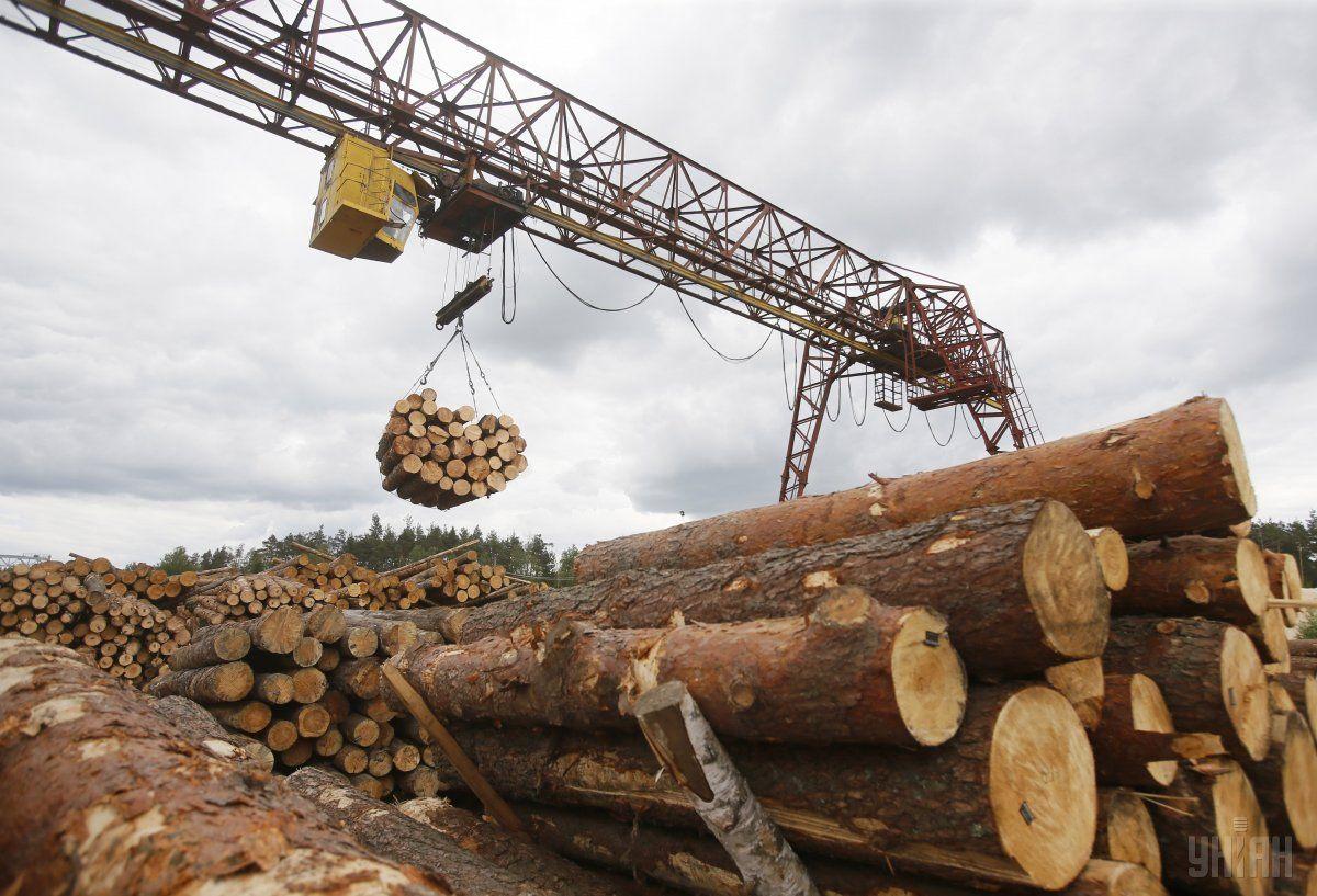 Невирішеним питанням залишається заборона на експорт лісоматеріалів / Фото УНІАН