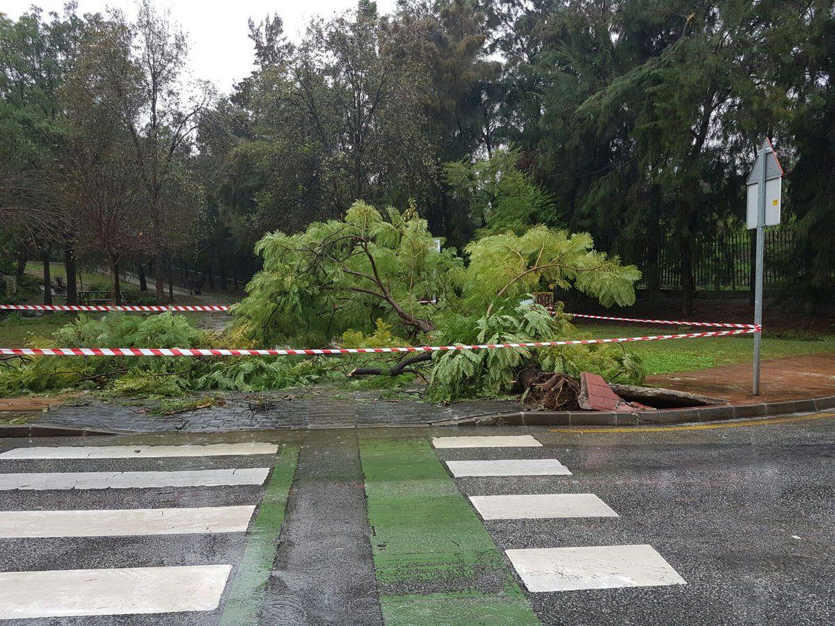 Іспанську Малагу накрили зливи / theolivepress.es