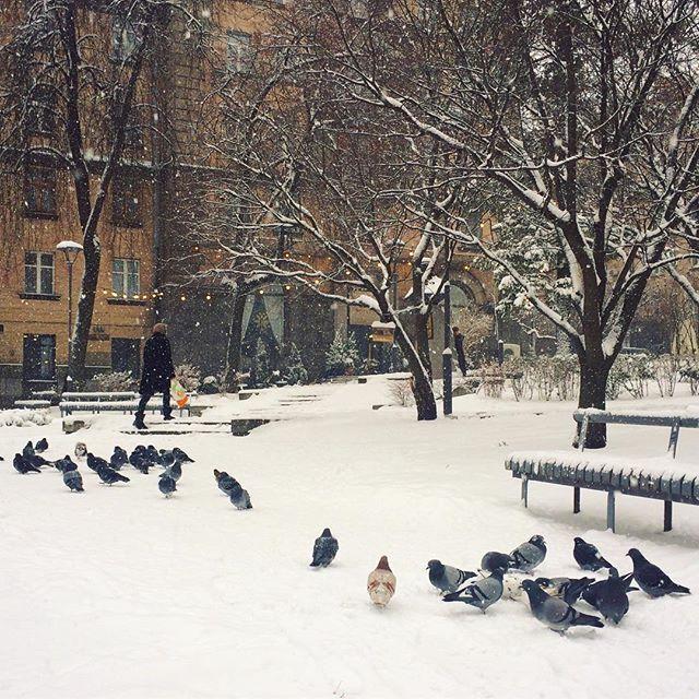 Сніг у Києві / vk.com, Таня Заволоко