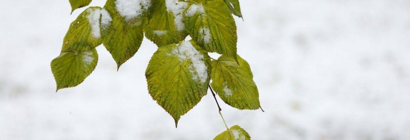 Синоптики розповіли, коли в Україні випаде сніг