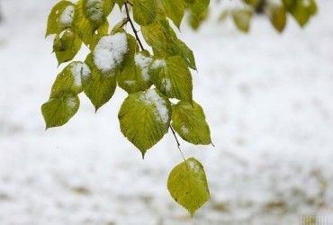 Де сніжитиме завтра: з'явився свіжий прогноз погоди в Україні