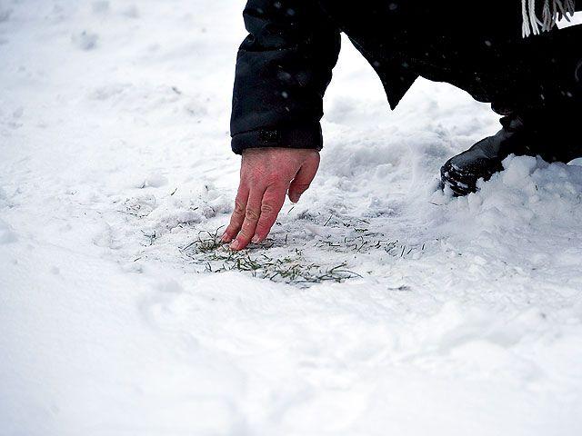 Поле в Сумах оказалось замерзшим / @FCKarpatyLviv