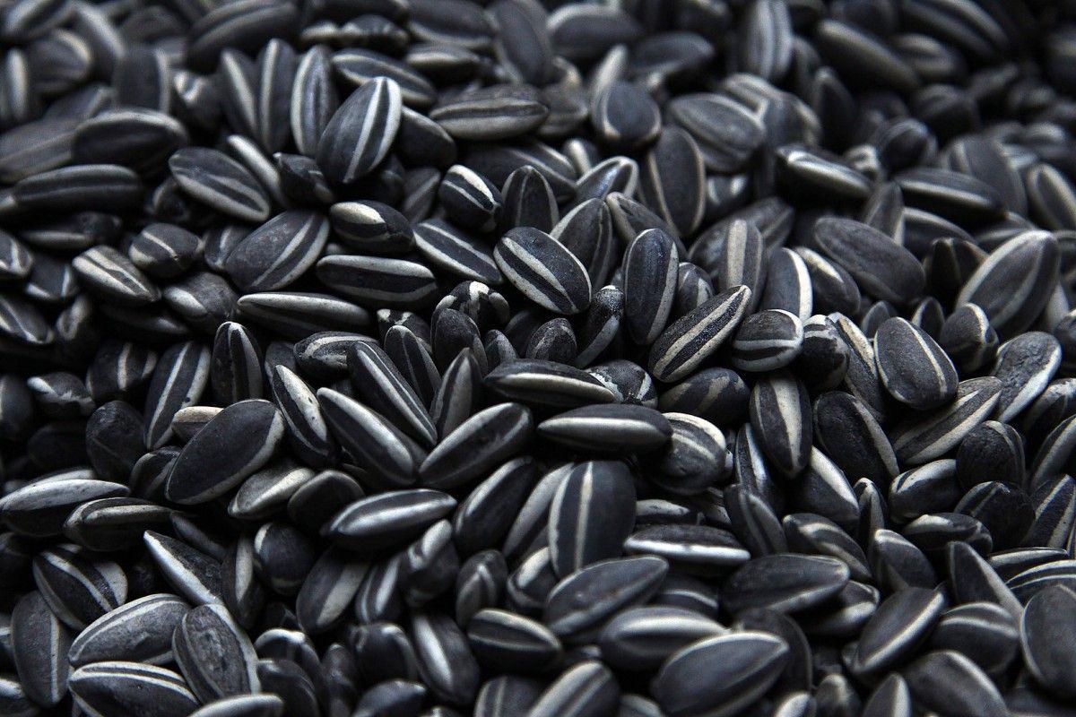 В Украине стремительно упали цены на семена подсолнечника / REUTERS