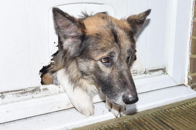 ВОдессе задержали женщину, которая вешала собаку надереве