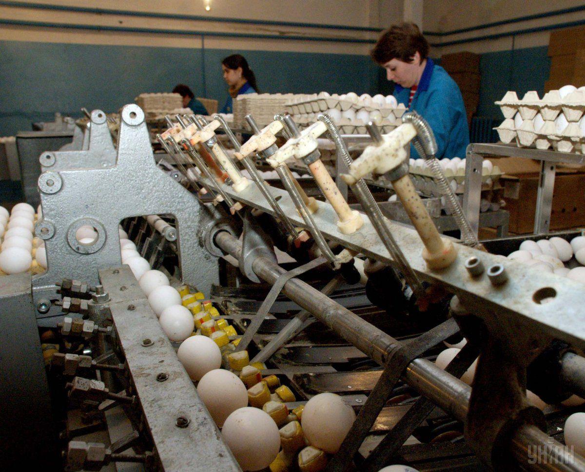 Украина рассчитывает возобновить экспорт яиц в Израиль / Фото УНИАН