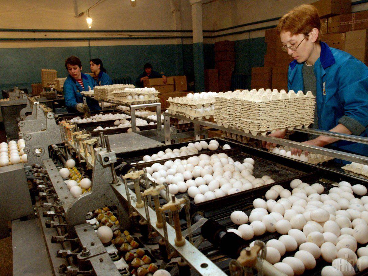 Экспорт яиц из Украины вырос почти в 2 раза / фото УНИАН
