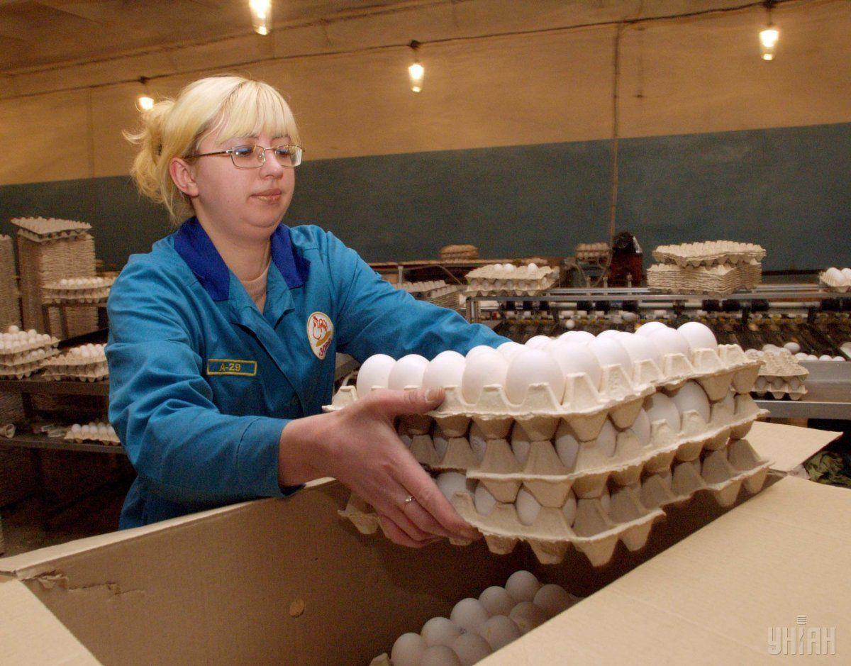 Україна нарощує експорт продукції птахівництва / фото УНІАН
