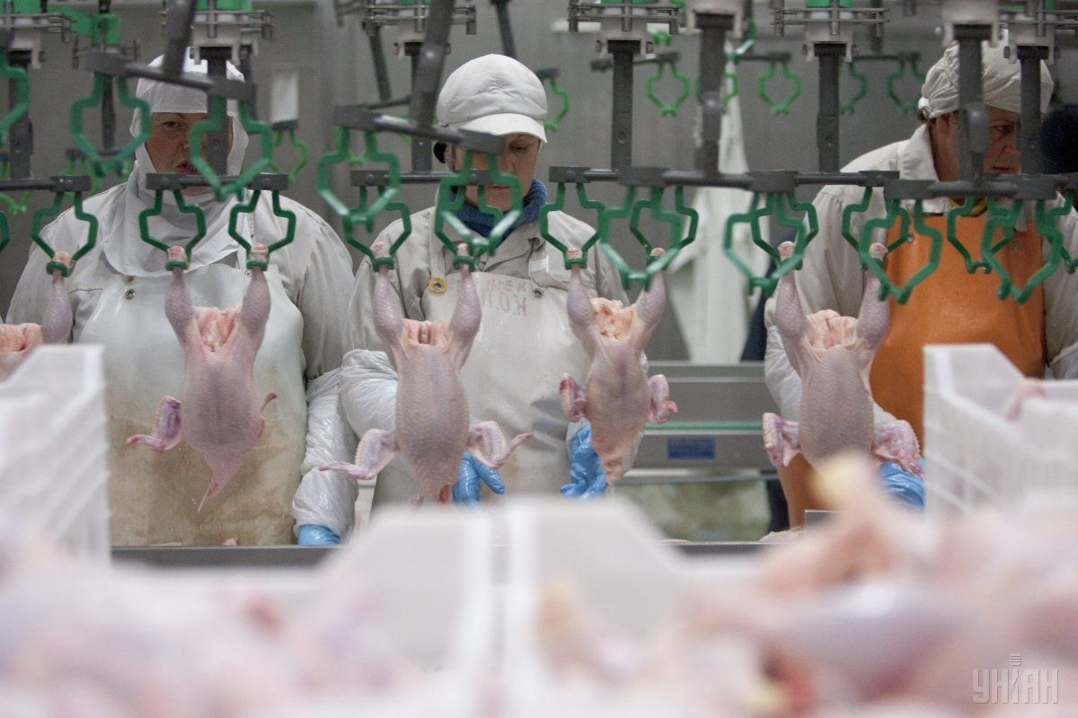 Україна буде продавати курятину і яйця в Гонконг / фото УНІАН