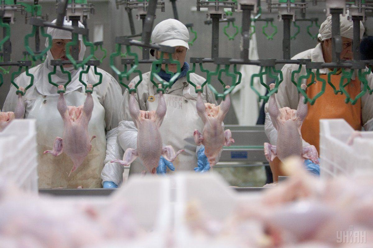 Украина увеличила экспорт мяса птицы / фото УНИАН