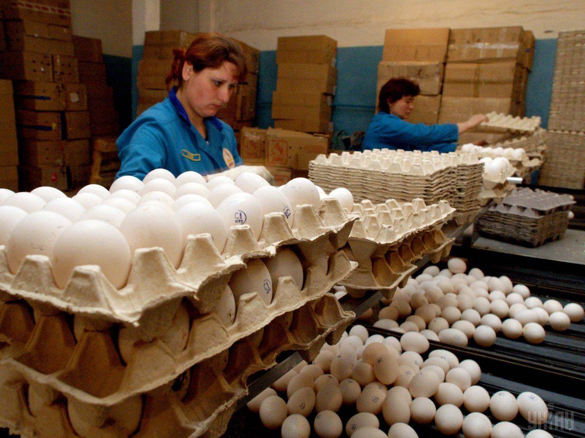 Украинские аграрии в 2017 году экспортировали 88,6 тыс. тонн яиц / фото УНИАН