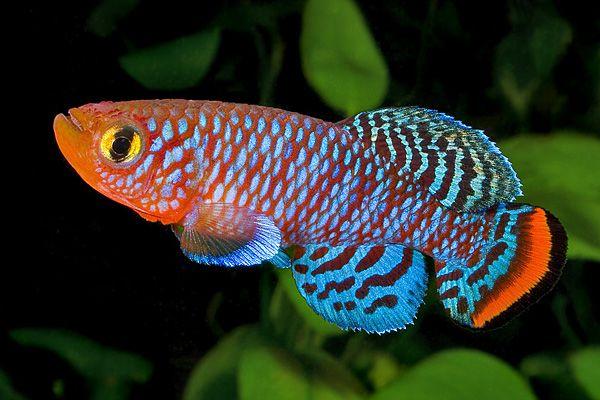 Раніше науковці стверджували, що риби не здатні відчувати біль, бо в них нескладна нервова система / geobotany