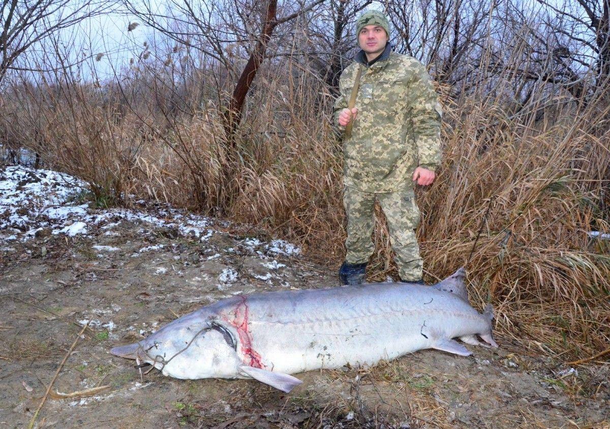 Начальник отдела пограничной службы, который задержал браконьеров с добычей / Фото Максим Яковлев