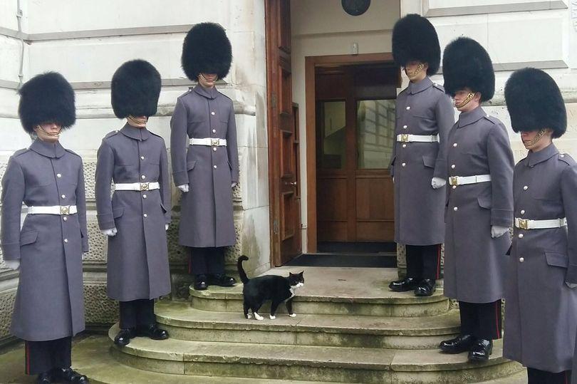 Кота Пальмерстона встретили возле дома шестеро гвардейцев-гренадеров / www.mirror.co.uk