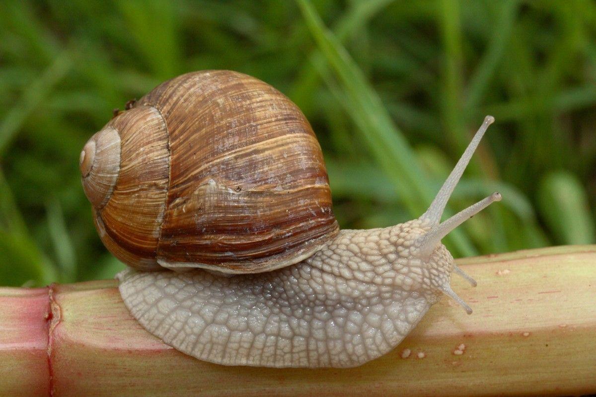 Повільні і ледачі види живуть довше, ніж енергійні / Wikiwand