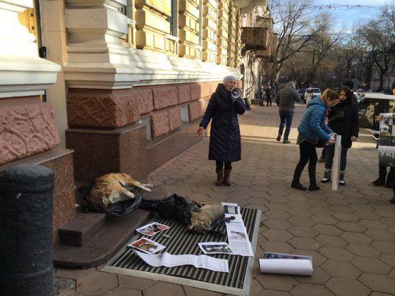 Собак отравили 25-го декабря / odessa.report