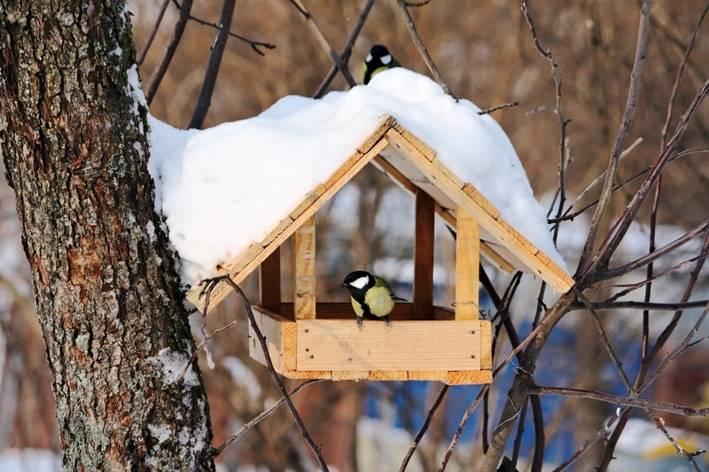 Повышение численности насекомоядных птиц в насаждениях сдерживает нарастание массового размножения вредителей / Фото dklg.kmu.gov.ua
