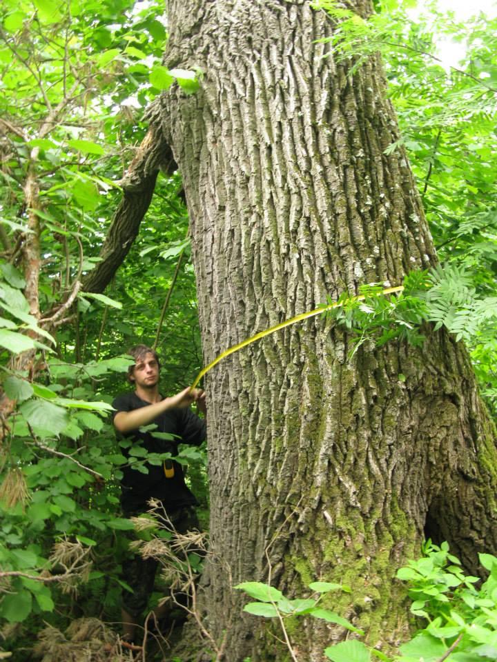 Праліси – це дуже невелика частка лісового фонду і держава може спокійно відмовитися від рубки / facebook.com/igor.balashov