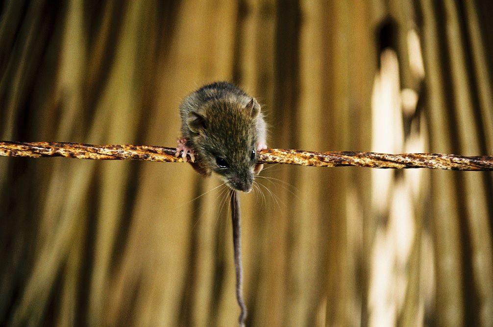 По одной из палат в больнице бегают мыши/ Фото JERVIS_PICS via flickr.com
