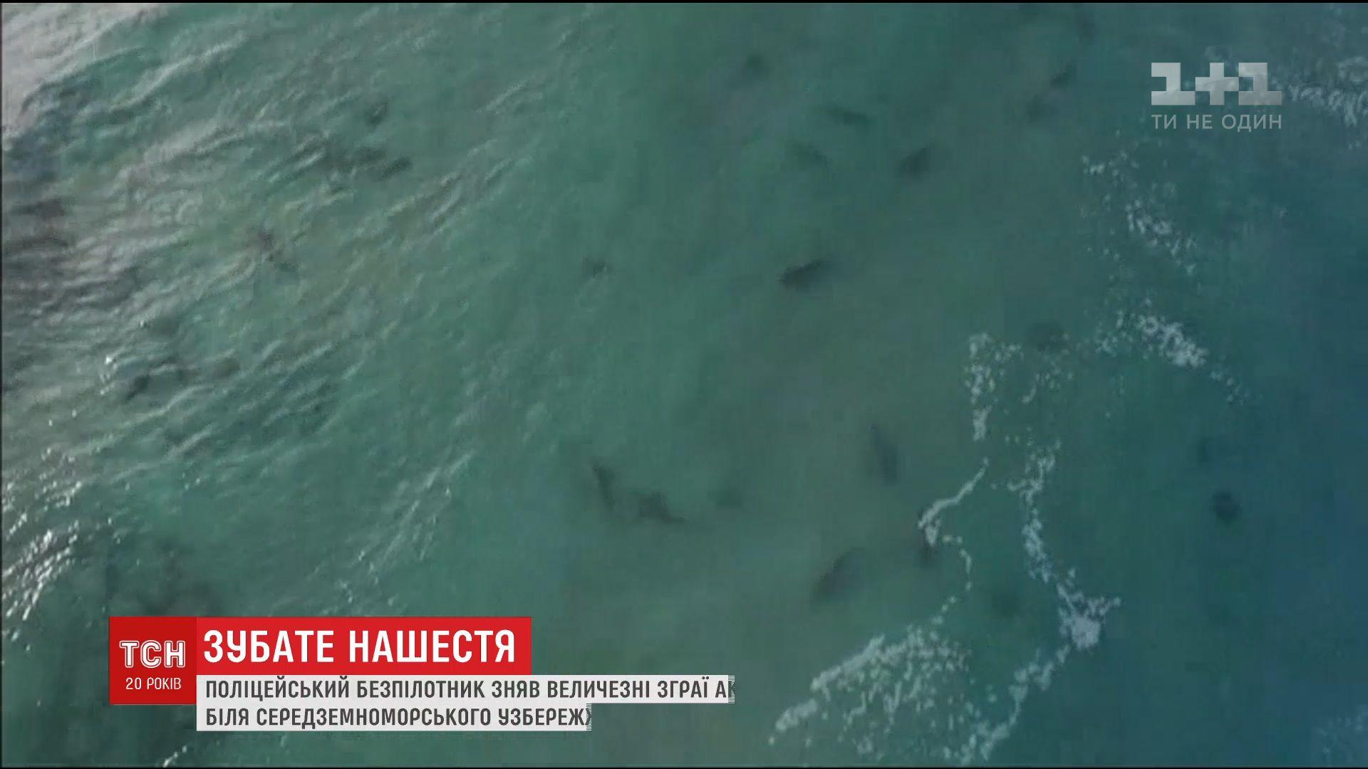 В Средиземном море у побережья Израиля неожиданно появились десятки акул /