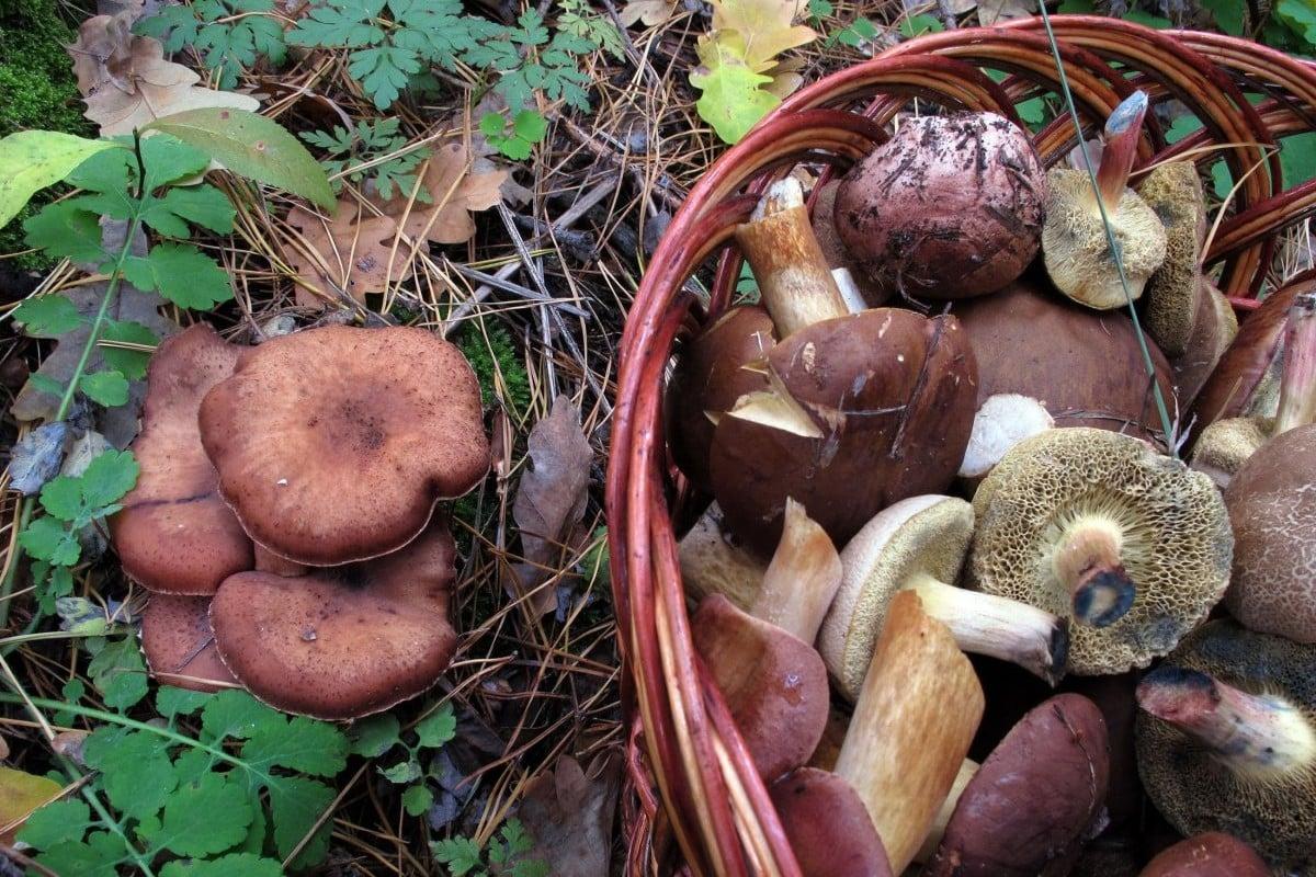 Группа харьковчан отравилась грибами / фото УНИАН